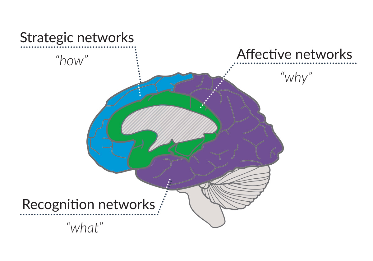 a picture of the brain with the three learning networks in the brain highlighted